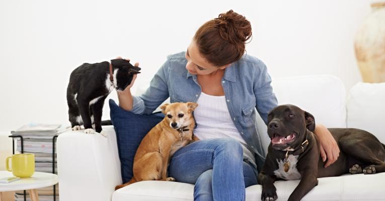 Casa com pets cheirosa e limpinha: confira dicas de especialistas
