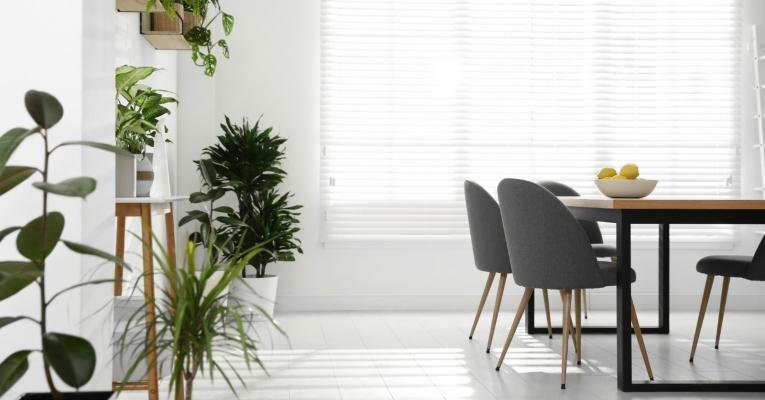 Urban jungle: dicas para seguir essa tendência de decoração