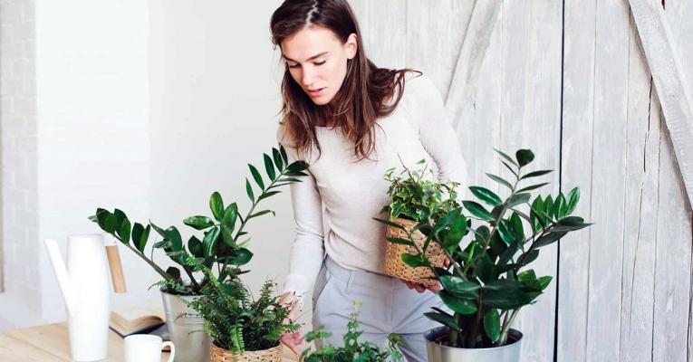 5 dicas para manter as plantas em casa saudáveis e bonitas